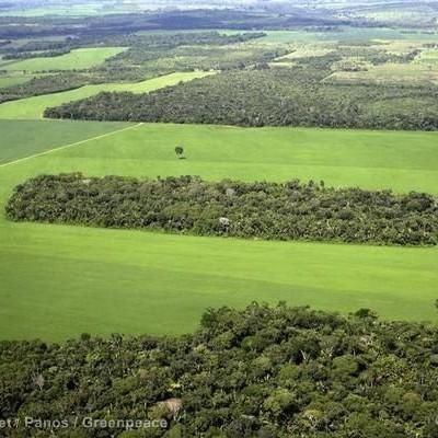 Só 11 de 52 municípios deixam de desmatar a Amazônia
