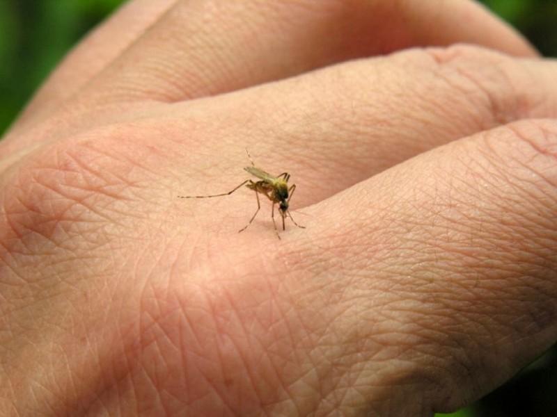 Ministério da Saúde trata chikungunyia como pandemia