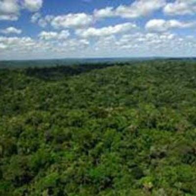 MPF recomenda imediata suspensão de leilão de florestas
