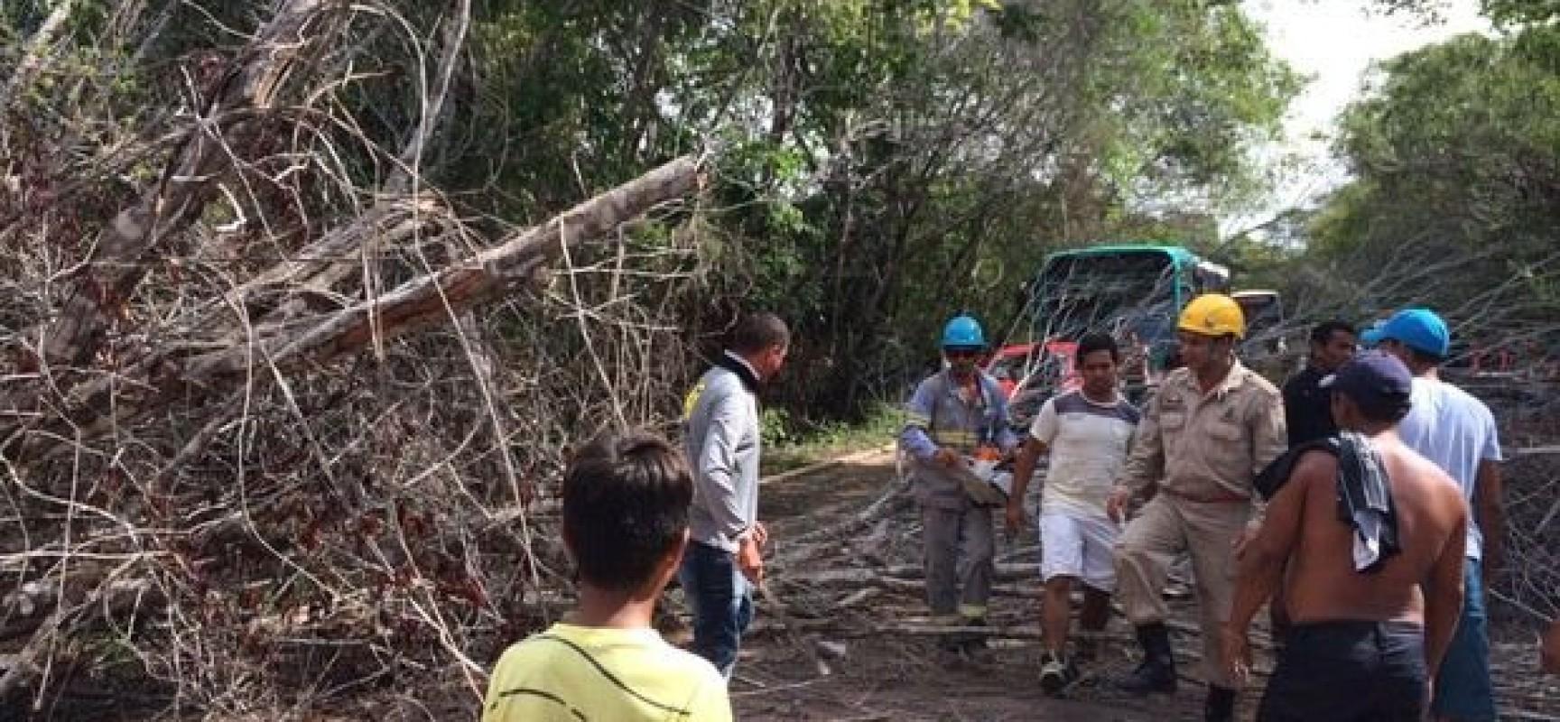 Árvore cai, atinge motoqueiro e deixa BR-163 bloqueada
