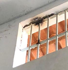 Grade onde pretendia a fuga (Foto:Divulgação Policia)