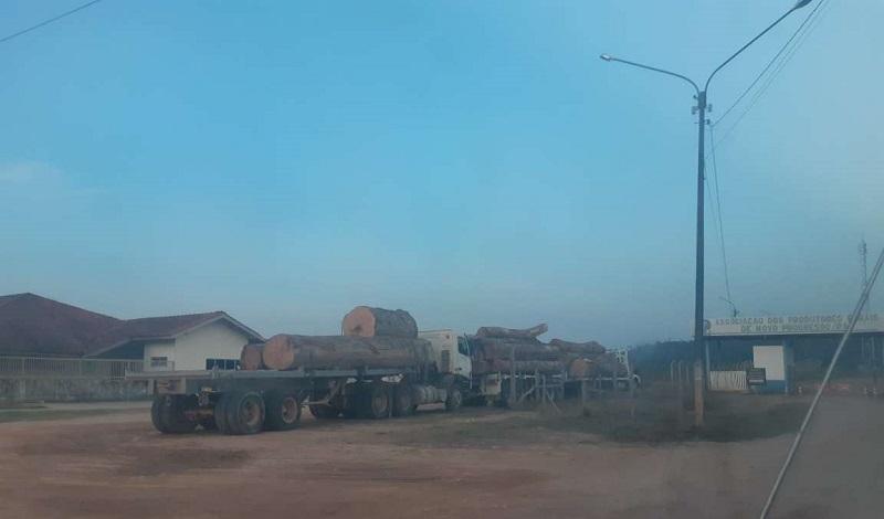 Caminhões com madeira em frente da sede do IBAMA em Novo Progresso (Foto: Jornal folha do Progresso)